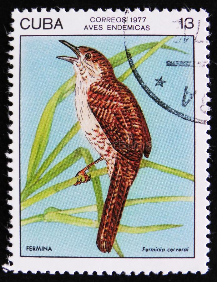 Bird Fermina or Zapata wren Ferminia cerverai, stamp is from the series, circa 1977. MOSCOW, RUSSIA - APRIL 2, 2017: A post stamp printed in Cuba shows the Bird stock images