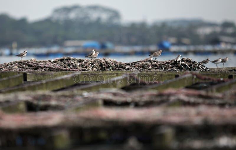 A Bird. A few of sea bird was take a brake at mussel farm park at Johor Bahru stock photos