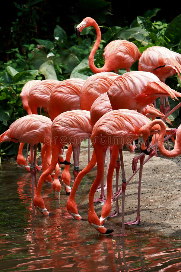 Download Bird flamingo stock image. Image of natural, head, background - 21805537