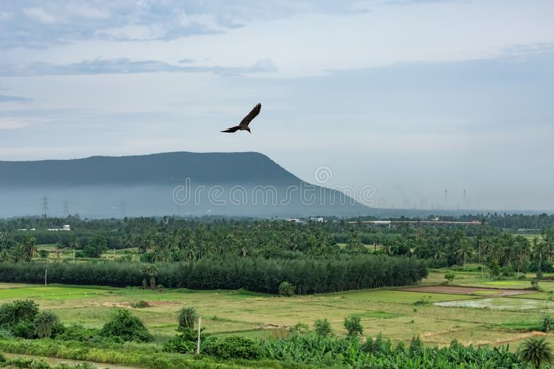 A bird is flaying on above of a mountain with greenery forest with blue sky looking awesome. stock photo