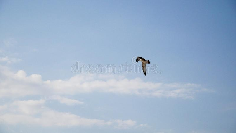 A bird flies against the sky in the summer atmosphere at sea stock image