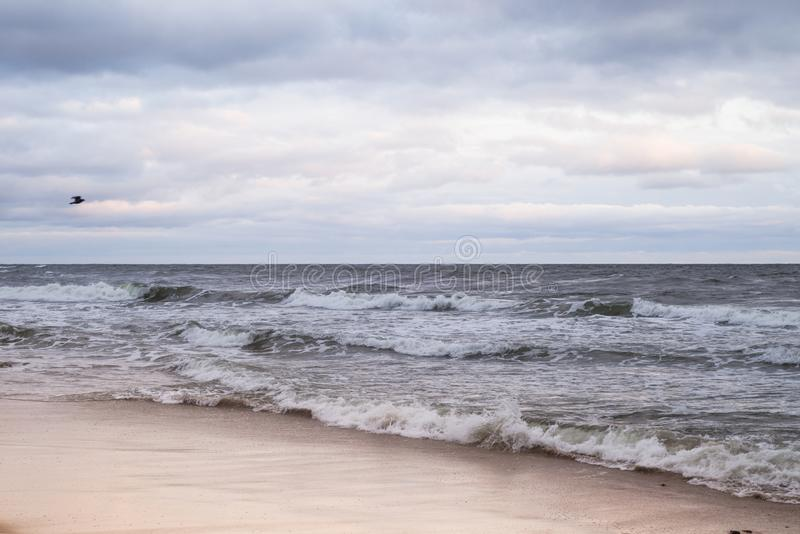 A bird flies over the Baltic sea stock images