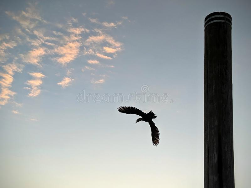 Bird flying from a post at sunrise stock photos