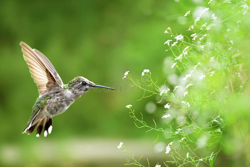 Bird in flight against bright spring background. Bird in flight against bright green spring background royalty free stock images