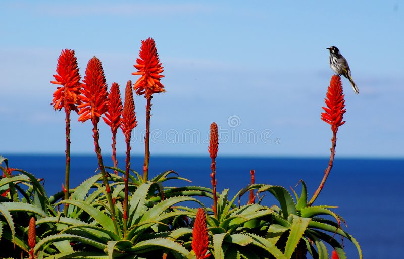 Bird, Flower & Ocean royalty free stock photography