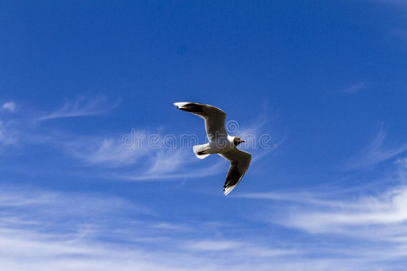 Bird flying in a sunny day royalty free stock photos
