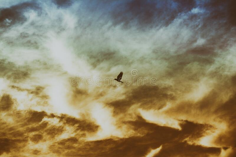 Bird Flying On Cloudy Sky Free Public Domain Cc0 Image