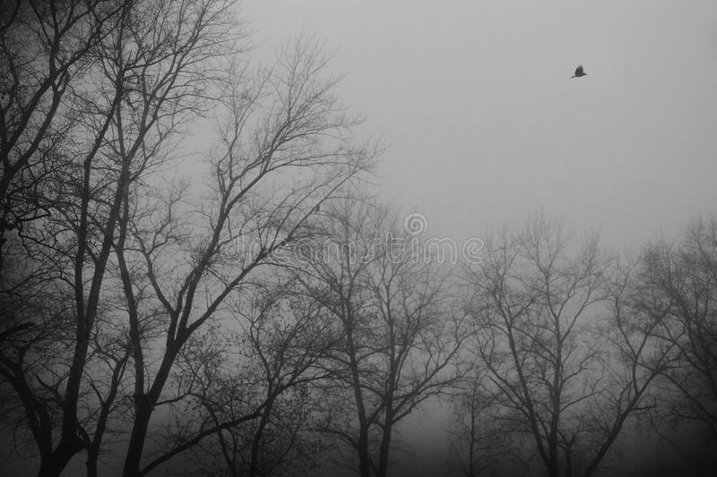 Bird is flying in the fog over Park royalty free stock images