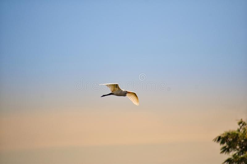 Fly High royalty free stock images