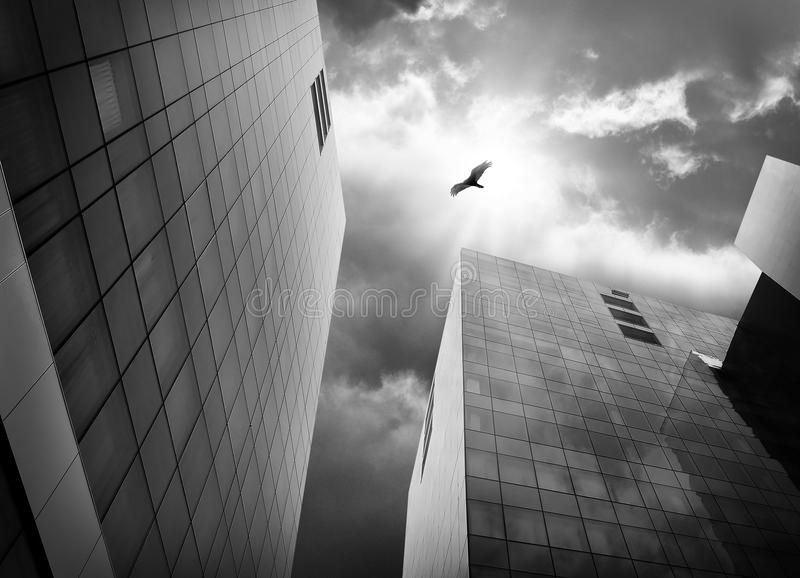 Bird Flying High in Sky in City with Buildings. A bird is flying with big wings high above city buildings in black and white for a freedom or escape concept royalty free stock images