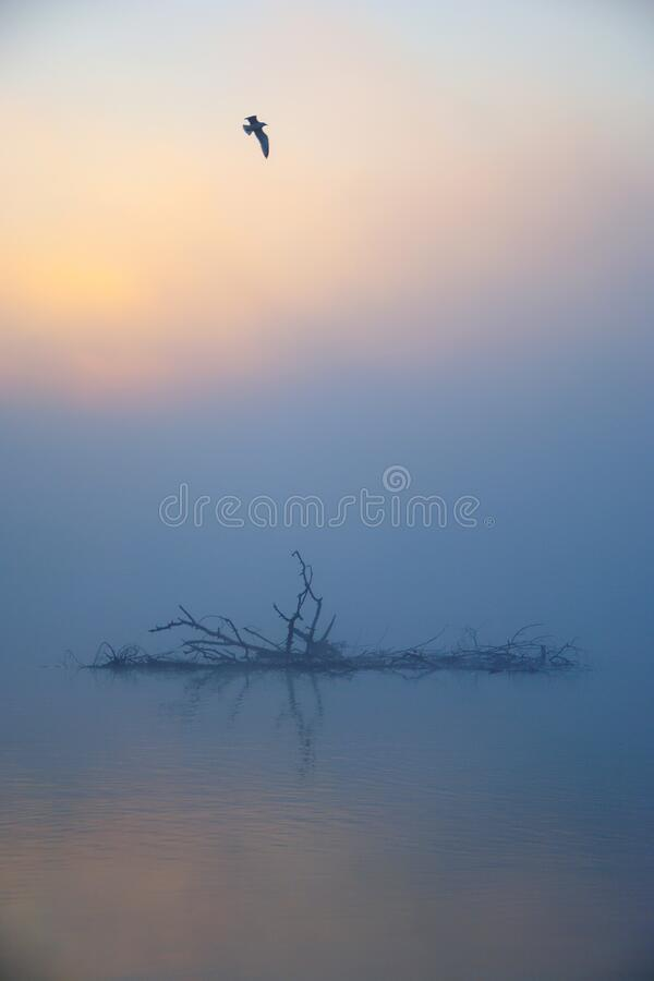 Free Bird Flying In Misty Autumn Morning Royalty Free Stock Images - 181381769