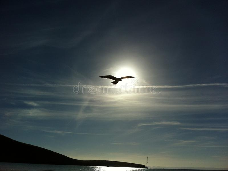 Bird Flying in the Middle on the Air Under Clear Blue Sky during Daytime royalty free stock photography