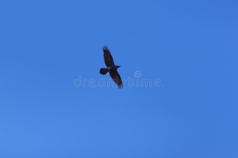 Bird flying over blue sky. stock photos