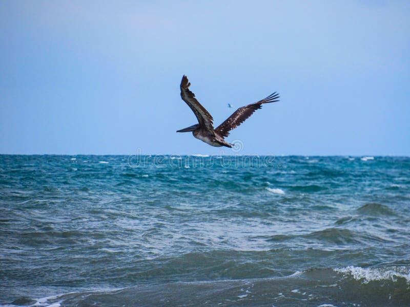 Bird flying over emerald ocean stock photos