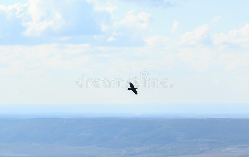 Bird flying over mountains. royalty free stock images