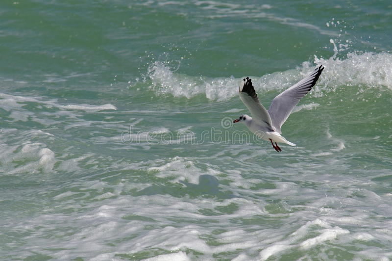 Seascape. Bird flying. Summer, sea, waves, holiday, fun - Black Sea, landmark attraction in Romania. Seascape. Bird flying over the sea. Summer, sea, waves royalty free stock photo