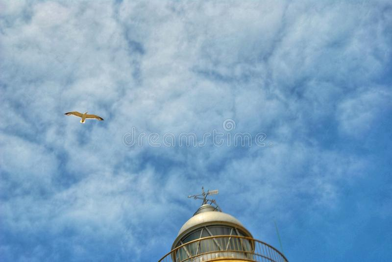 the flight of the bird royalty free stock images