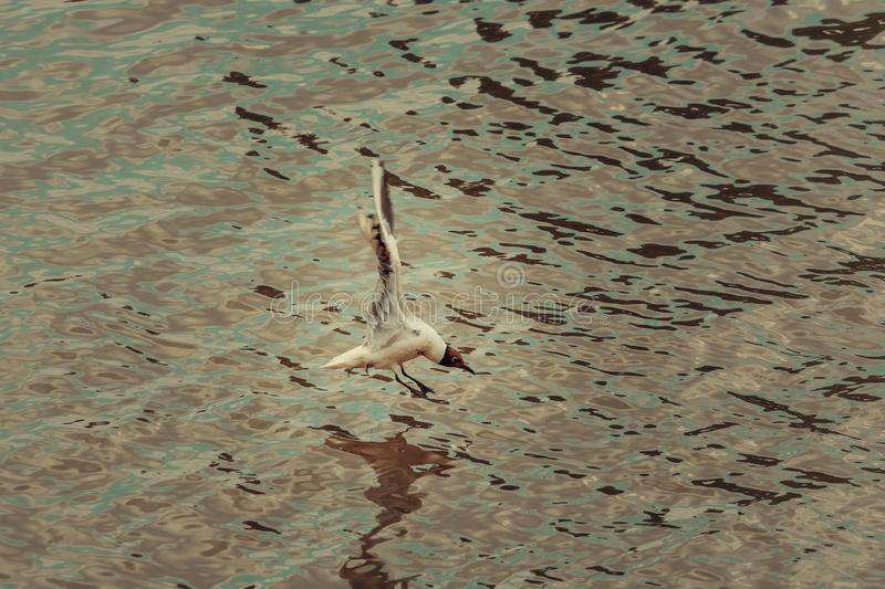 A bird flying over the water. Portugal stock image