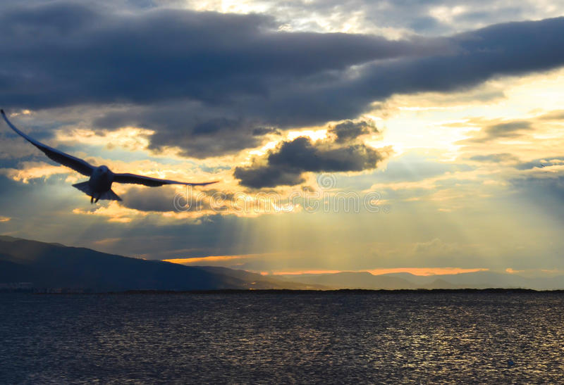 Download Bird Flying On The Sea At Sunset, Silhouette. Sun Between Clouds And Seagulls Flying. Stock Photo - Image: 83700725