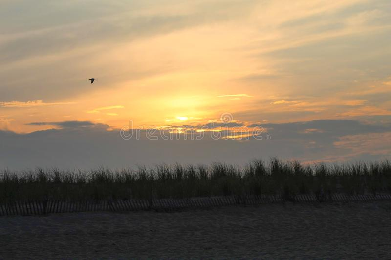 Bird flying in the sky at sunset at the ocean. Atlantic, sand, beach, caoe, cape, henlopen, delaware, orange, yellow, colorful, grass, wooden, fence, clouds royalty free stock photo