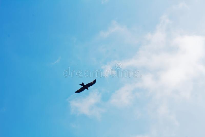Bird flying, soaring in the sky, nice weather. Bird flying, soaring against the clear blue sky with outstretched wings flight freedom graceful spirituality royalty free stock photography