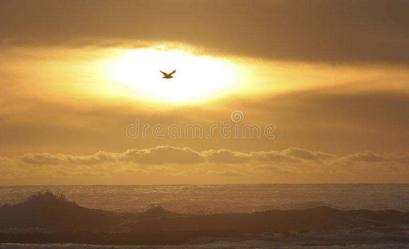 Bird flying in the sun stock image