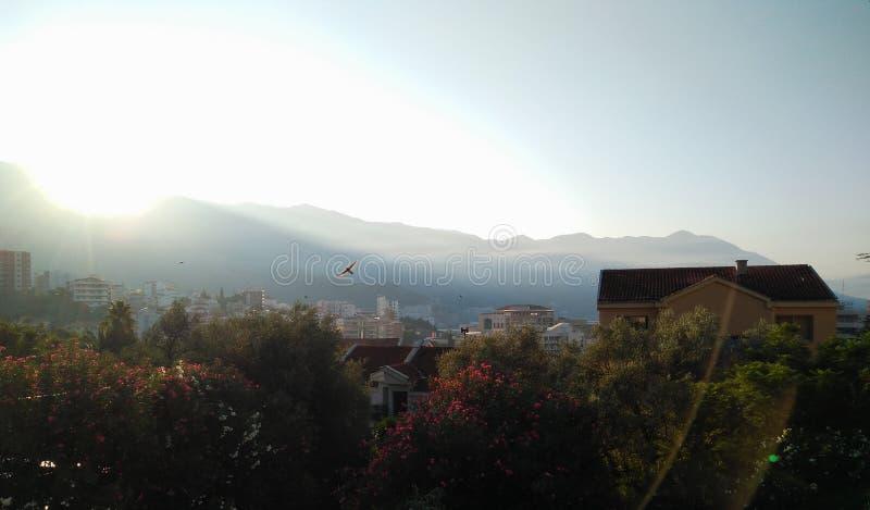 Bird flying on the sunrise background royalty free stock image