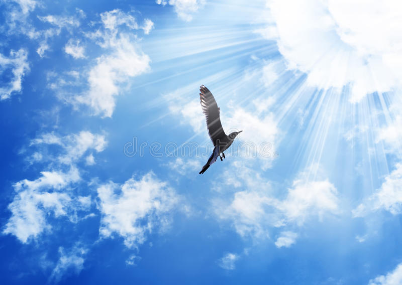 Bird flying to the sun. Flying bird in the sun beams opposite blue sky with white clouds