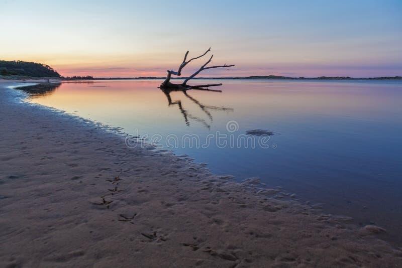 Bird footprints, driftwood, sunrise. Australia. royalty free stock photos