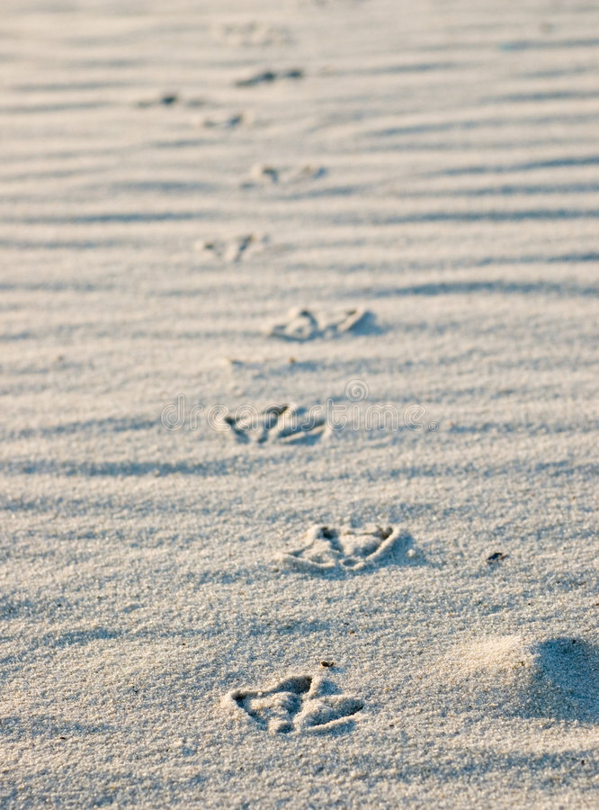 Free Bird Footprints In Sand Stock Images - 927454