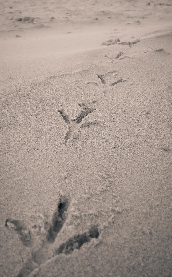 Free Bird Footprints On Sand Beach Stock Photos - 63818943