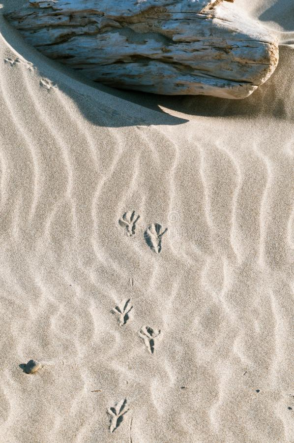 Bird Footprints In The Sand . Stock Image - Image of sand, landscape ...