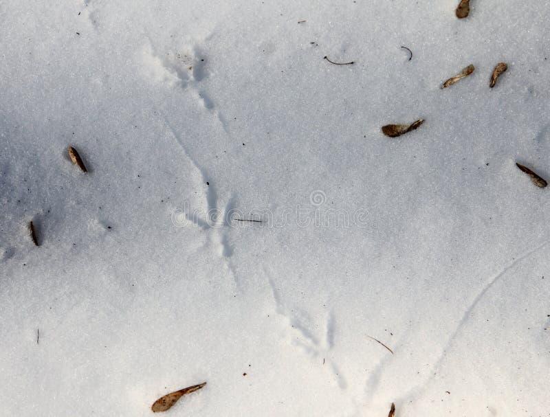 Download Bird footprints on snow stock image. Image of season - 39500469