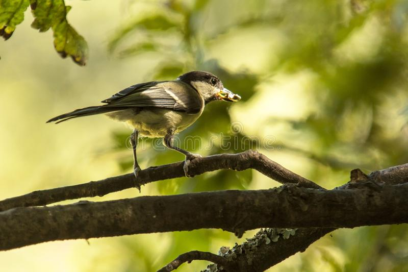 Download Bird in forest stock image. Image of perched, adorable - 27710407