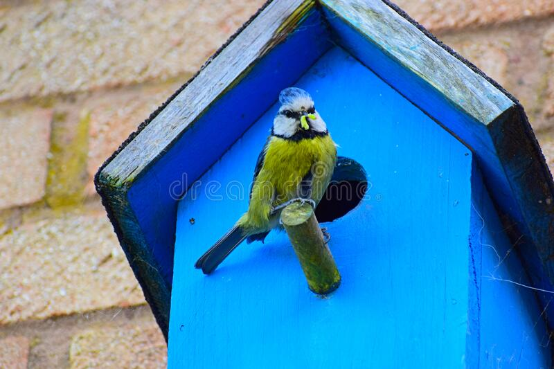 Bird With A Grub In It`s Beak royalty free stock image