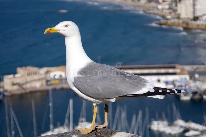Bird, Gull, Seabird, Beak Free Public Domain Cc0 Image