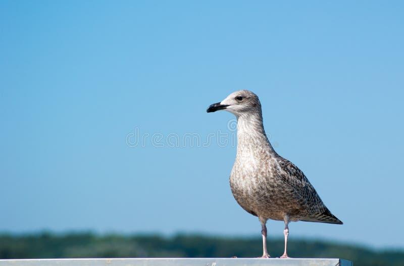 Bird, Gull, Seabird, Fauna Free Public Domain Cc0 Image