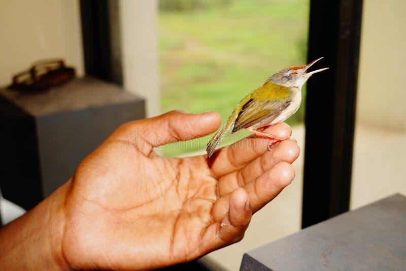 Bird in hand royalty free stock photo