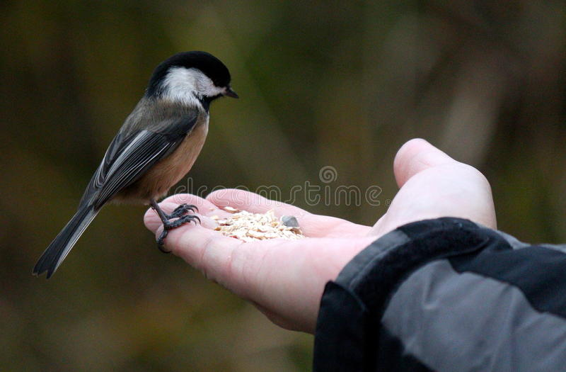 Bird on Hand stock photo
