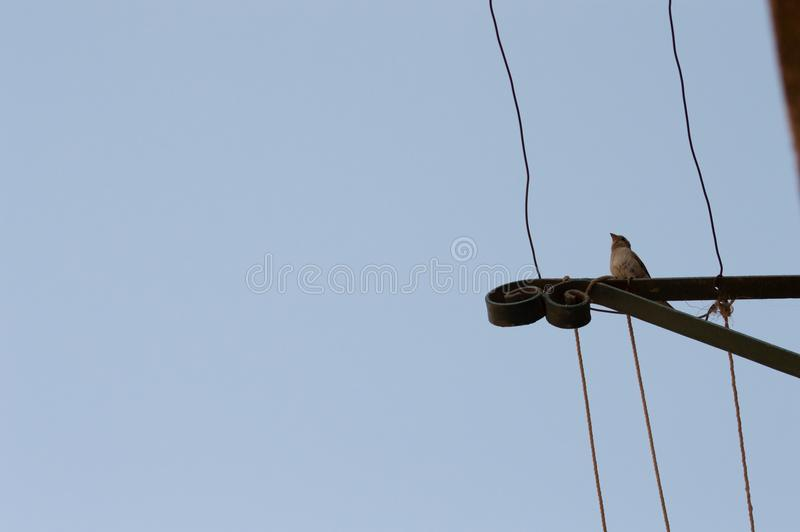 Bird Silhouette on wire against blue sky royalty free stock photography