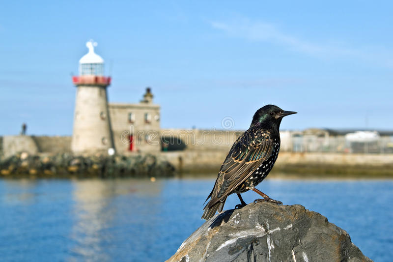 Bird at the harbor of Dublin Howth stock photos
