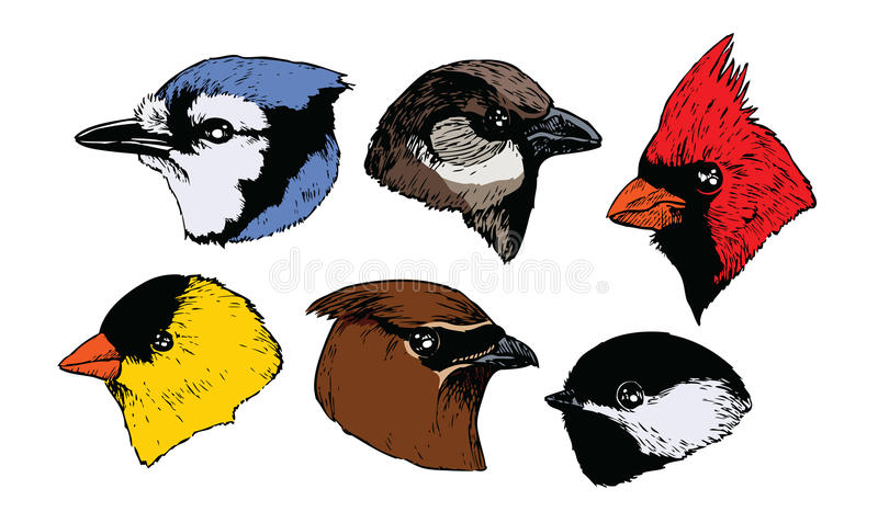 Bird Heads Royalty Free Stock Image