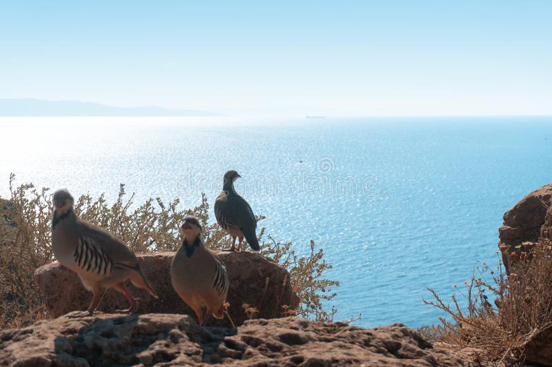 Bird at the high cliff about the sea royalty free stock photos