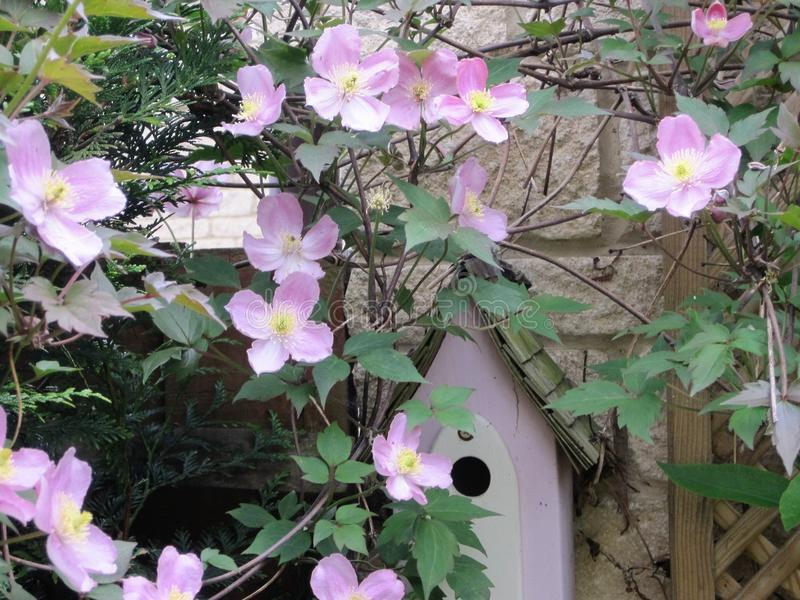 Bird house with clematis stock image