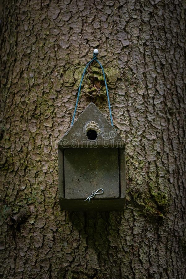 Bird house deep in the forest stock image