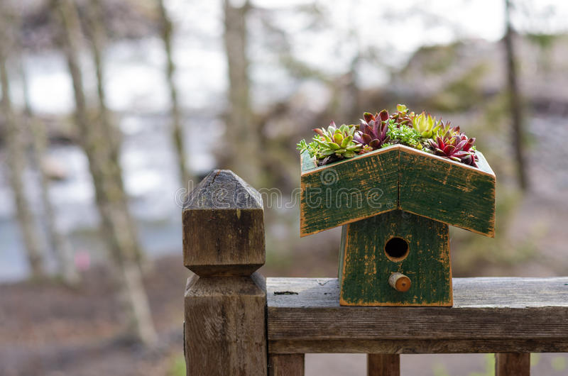 Bird house with green eco roof. Bird house on railing with planted sedum green roof royalty free stock image