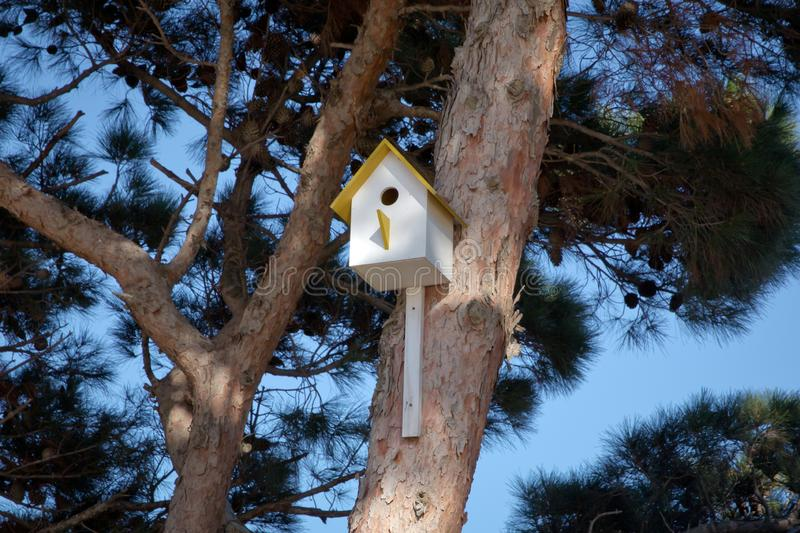 Bird house hanging from the tree with the entrance hole in the shape of a circle. Azerbaijan Baku . Yellow birdhouse on a tree in stock images
