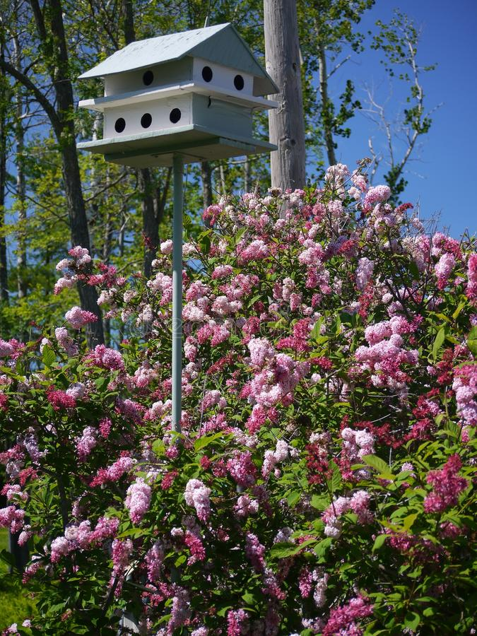 Bird house and Lilacs royalty free stock images