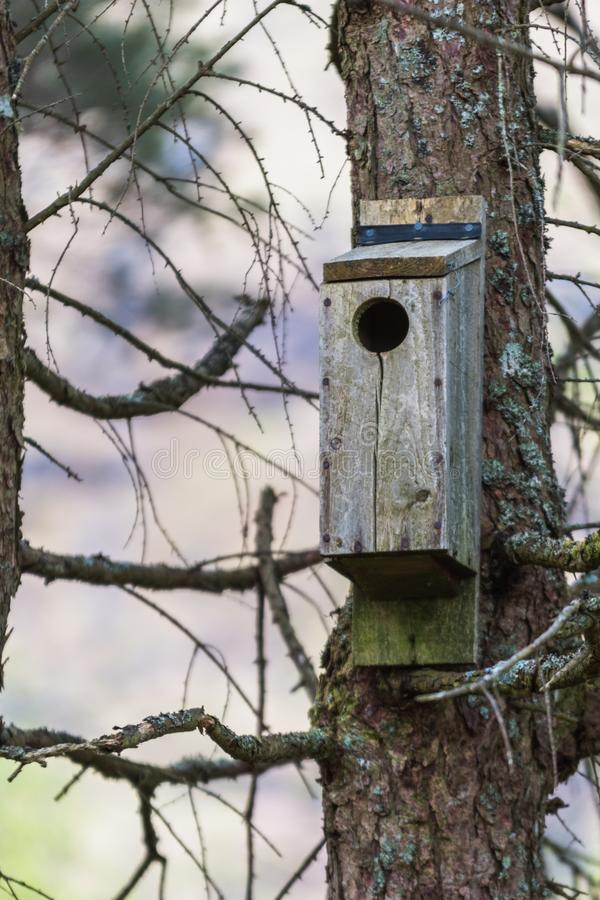 Bird house in a nature reserve. In Scotland Glencoe hang on a tree during Spring in a forest in the Highlands royalty free stock images