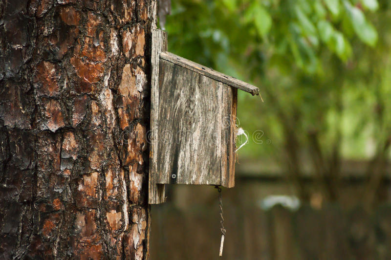 Bird house. On a tree trunk stock photography